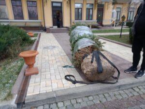 Перевезти дерево