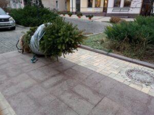перевозка деревьев в Киеве